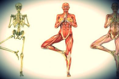 kurs anatomii i fizjologii